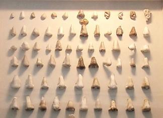 La huella de las narices